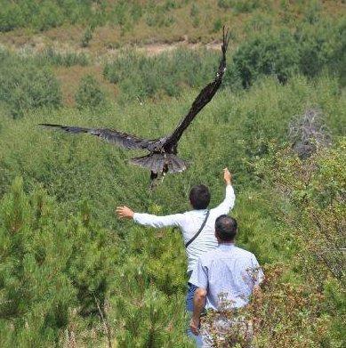 GPS/UHF Wildlife Radio Telemetry Avian Tag. 50g  Solar Powered  UHF Radio Download & Setup Coded UHF Radio Tracking Beacon